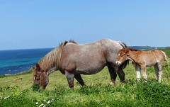 (Emma2922) Tags: animal nature extérieur outdoor mer horse cheval