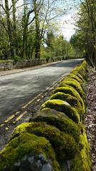 Road next to Loch Lomond (vbolinius) Tags: 2017 highlands lochlomond scotland travel