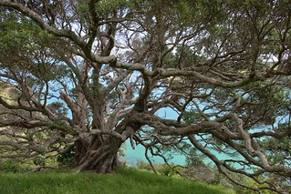 Grandaddy tree...