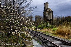 Abandoned (travelphotographer2003) Tags: abandoned alleghenymountains appalachianmountains bo stormysky floweringtree cowen freshness purity sandhouse shops trainyard tranquilscene webstercounty westvirginia railroad refreshment railroadtracks