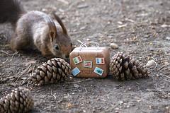 Squirrel (Trutnauphotography) Tags: eichhörnchen squirrel trip nature wildanimal animal squirrelwhisperer fun spass ngc