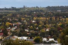 That time of year (Eduardo_il_Magnifico) Tags: autumn seasons colour trees foliage plants armidale newengland newsouthwales nsw australia town landscape buildings lookout nikond750 tamron70300mm tripod