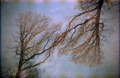 Trees shaking branches (the future is analog) Tags: lomo lomography redscale analog film exa 1a doubleexposure tree baum doppelbelichtung