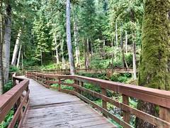 Ketchikan AK ~ rainforest walk (karma (Karen)) Tags: ketchikan alaska herringcove rainforest boardwalks trees moss fences hff iphone topf25