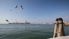 Venetian Birds (the CAMera of ian CAMpbell; simple) Tags: venice venetian sea bird birds gulls seagulls chiesa di san giorgio maggiore