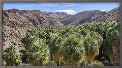 Palm Canyon (Sugardxn) Tags: palm mountain sky outdoor sugardxn green southwest socal palmsprings palmcanyon canon canon7d canoneos7d photoshop picswithframes frame