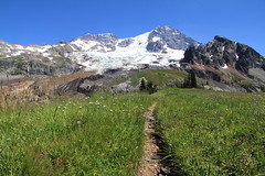 IMG_9702 (Mark Bischoff) Tags: mount rainier mountain cascade range national park washington state glacier snow white rocks gray brown blue sky water fall waterfall meadow flowers pink wildflowers wild grass trees green landscape wonderland trail emerald ridge woods outdoors outside