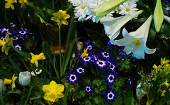 Easter Flowers (larrynunziato) Tags: floral easter
