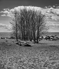 Trees by the lake 1 (GBaker63) Tags: toronto tree beach lakeontario bw olympus omdem1