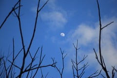 A distant moon (marensr) Tags: moon sky heavens branches blue clouds
