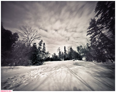 The snowy field (DelioTO) Tags: 4x5 adoxchs100 blackwhite d23 toned february landscape natparks ontario pinhole rural trails winter woods autaut