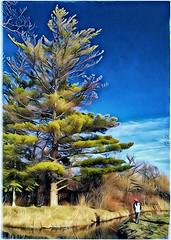 PINE girl (plismo) Tags: town peterborough ontario pine pinetree river otonabeeriver people littlegirl person water plismo