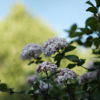 Spring Bokeh with