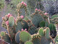 Sonoran Spring @ DBG (Az~Kate) Tags: cactus blooms birds wildflowers arizona beauty spring