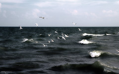 Lake Erie - Point Pelee National Park (Ontario, Canada) (Andrea Moscato) Tags: andreamoscato canada america water freshwater waves acqua lago lake white dark landscape nature natura nuvole natural naturale gabbiani bird gull view vista vivid shadow light