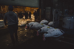 Frozen Tuna Auction @ Tsukiji, Tokyo, Japan (erik-peterson) Tags: 2016 d3s erikpeterson family japan october tokyo vacation tsukiji market fish auction tuna frozen