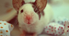 http://ift.tt/2mCK0nZ Just Pinned to Animals: He can pick up radio with those ears! http://ift.tt/2p7qrWg (animalover.ry) Tags: animal animals lover lovers animalover