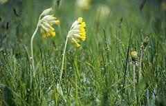 Rain sounds (socioclic) Tags: acqua light water colours verde flowers focus fiori green greenscene grass nature