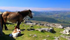 Pays Basque (FrançoisVéquaud) Tags: paysbasque mondarrain pottok montagne landscape pyrénées 64 sudouest