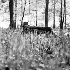 Mamiya089 (salparadise666) Tags: sunday morning walk series mamiya c330 sekor 80mm fomapan 100 boxspeed no filter caffenol cl stand developed by mistake 60min nils volkmer vintage camera medium format 6x6 square nature landscape wood forest monochrome bw black white contrast view detail