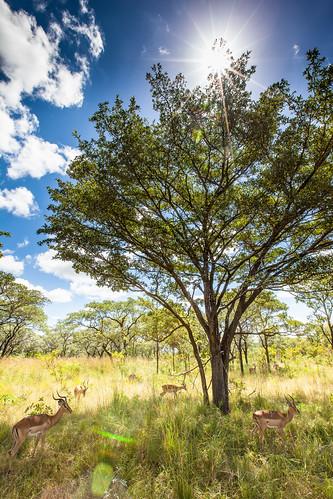 KrugerParkREIZ&HIGHRES-63