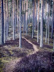 take a break (sami kuosmanen) Tags: suomi finland forest luonto light nature north europe heisanharju girl woman nainen polku path metsä maisema landscape photography puu people tree pine mänty