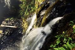 Waterfall (Marta Marcato) Tags: water waterfall ireland green grass flowers rocks motionblur light acqua cascata irlanda verde erba fiori rocce luce connemara nikond7200