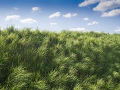 Horizon (enneafive) Tags: berm sunkenlane walking trail bluesky clouds grass green bleu white olympus omd em5 borgloon gotem horizon hesbania wind wavinggrass