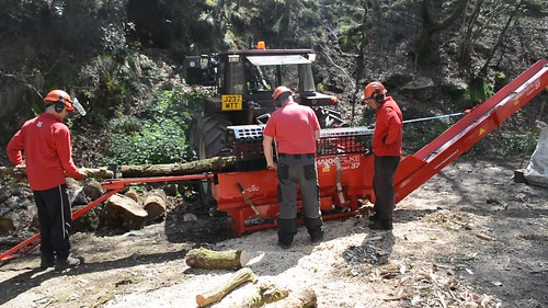 firewood processing in Fingle Wood
