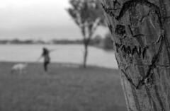 Pirouettes in the Park (leicaflex, 50mm summicron) (PositiveAboutNegatives) Tags: leica bw film analog 50mm florida kodak trix summicron manualfocus markii leicaflex leitz lakeworth dancinginthepark vintageslr 50mmsummicron colorneg 11218 vuescan leicar leicaflexstandard colorperfect nikon9000scanner blackandwhitefilmphotography johnprincememorialpark leicafilmphotography freefilmimages freefilmpictures