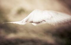 The Artist Tern (oskarpall) Tags: thephotographyblog