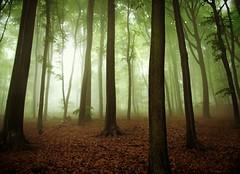 FinallyFreeInHeadAndHeart (BphotoR) Tags: morning trees mist fog forest germany deutschland woods nebel hessen heart silhouettes free foliage explore wald finally odenwald bergstrasse juhhe forestofodes canonpowershotg10 weschnitztal bphotor mffp
