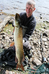 17lb Pike (salmoferox) Tags: fish scotland fishing loch pike predator cr pikefishing catchandrelease catchrelease pikeflyfishing