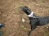GreyhoundPlanetDay2008048