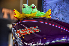 Harley Davidson Museum (Thank You 7.5 Million Visitors!) Tags: felix harleydavidson milwaukeewi harleydavidsonmotorcycle 110yearanniversary harleydavidsonmuseum pamelaschreckengost pamschreckcom 2013pamelaschreckengost