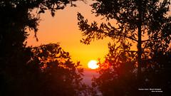 Sunrise Colors - Mount Tamalpais (davidyuweb) Tags: sf sanfrancisco california usa tree colors sunrise mt mount tamalpais tam sfbay sfist