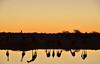 Etosha National Park (R Boyd) Tags: etosha namibia giraffes okaukuejo