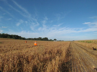 South Dakota Pheasant Hunt - Pierre 22