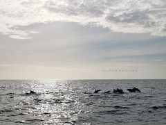 Dolphin Watching in Panglao, Bohol (mrs. sparks) Tags: travel philippines dolphins bohol panglao