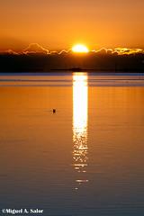 MASF_06102013_47874-Editar (Miguel_ngel) Tags: sunshine canon ma rice amanecer 7d arroz albada deltadelebre miguelasalor miguelasalor agriculrura casadelafusta festadelasegadelta