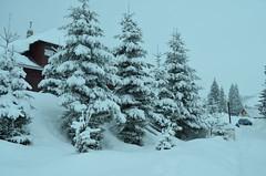 Winter is here! (dccalin05) Tags: trees winter vacation blackandwhite white snow cold ice landscape nikon romania ba ranca nikonromanianclub d5100 outstandingromanianphotographers ringexcellence dblringexcellence tplringexcellence eltringexcellence