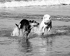 Playtime (castrospad) Tags: california beach water beautiful canon 7d wedge 400mm 2013 canon7d wwwalternativeexposurescom