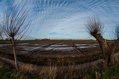 Curves: clouds, water, tree and tracks (PaulHoo) Tags: tree lines clouds de landscape nikon curves tracks wolken wideangle fisheye gemeente 8mm 2014 ronde abcoude venen samyang d300s mygearandme