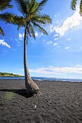 Palm Tree (phelikia) Tags: beach blacksand hawaii palmtree tropical bigisland vaca