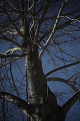 Climb All The Way Up To The Top (Dan Constien) Tags: blue tree wisconsin lens 50mm branches full madison frame canon5d wi madisonwisconsin walkingaround 50mmlens niftyfifty danconstien