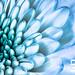 flowermacro-2
