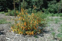 110417_2076.jpg (Weeding Wild Suburbia) Tags: park gardens publicgardens spnp
