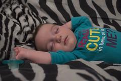 Luna Day 143 (evaxebra) Tags: blue sleeping baby cute sleep teal luna couch zebra 365baby