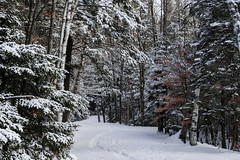 Adirondack Park, Trail-7507428 (Ron Biedenbach) Tags: adirondack park woods trail trees winter snow