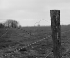 re-post (losthalo) Tags: repost fence redo rural fenceline barbedwire dof depthoffield pentaxart k1000 smcpm50mmf2 emptiness